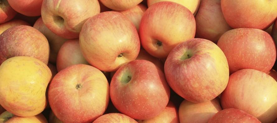 Lecker-Schmecker-Monat September: Heimisches Obst und Gemüse mit Frischegarantie