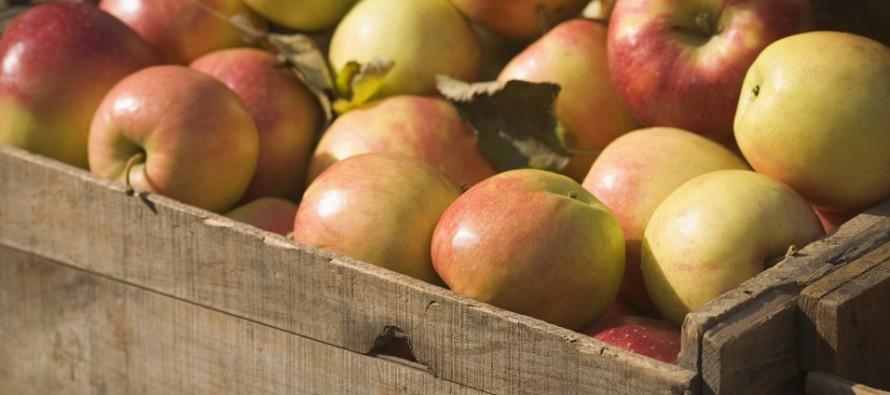 Nach der Ernte: So lagern Sie Ihre Äpfel korrekt