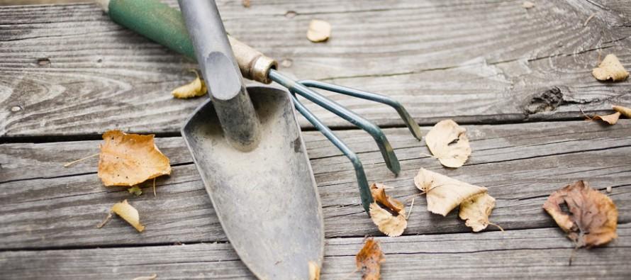 Der Garten im November: Auf zur Schlussoffensive
