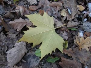 Frühlingshafter Winter: Das ist der wärmste Dezember aller Zeiten
