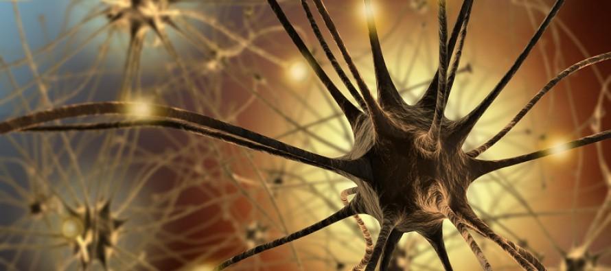 Studie belegt: Gehirne sind nicht rein männlich oder weiblich