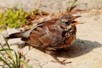 Festmahl für Vögel: Selbstgemachte Meisenknödel