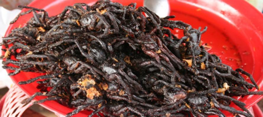 Insekten als Trend-Nahrungsmittel