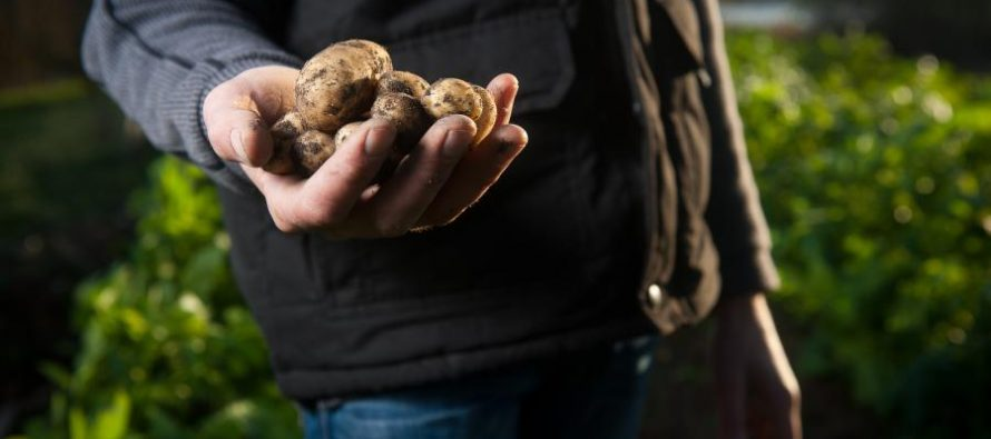 Nachhaltige Ernährung: Warum regional und saisonal einkaufen besser ist